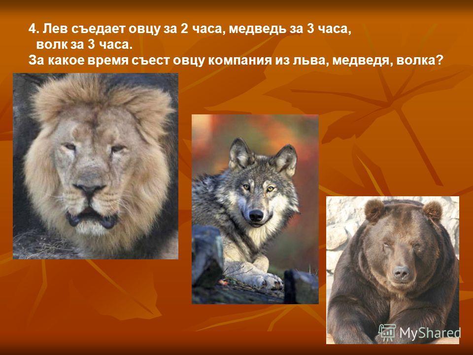 4. Лев съедает овцу за 2 часа, медведь за 3 часа, волк за 3 часа. За какое время съест овцу компания из льва, медведя, волка?