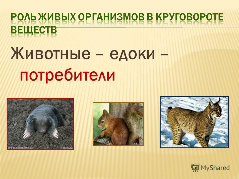 Животные – едоки – потребители