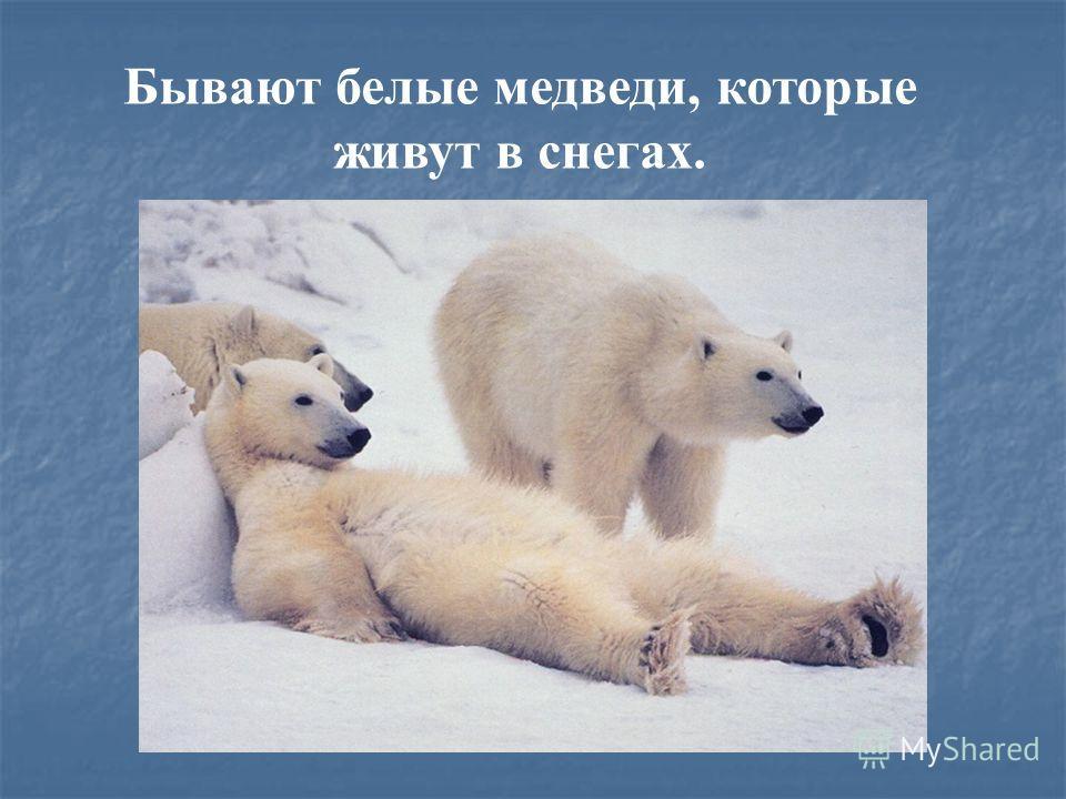 Бывают белые медведи, которые живут в снегах.