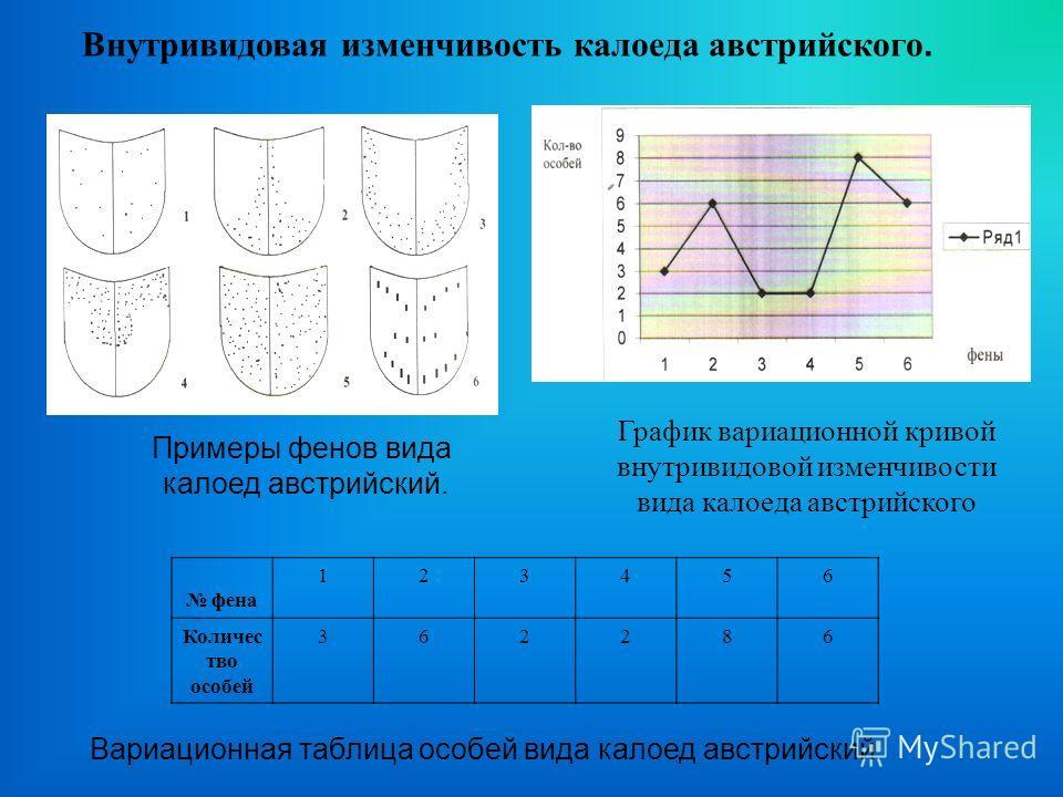 Внутривидовая изменчивость калоеда австрийского. Примеры фенов вида калоед австрийский. График вариационной кривой внутривидовой изменчивости вида калоеда австрийского Вариационная таблица особей вида калоед австрийский фена 123456 Количес тво особей