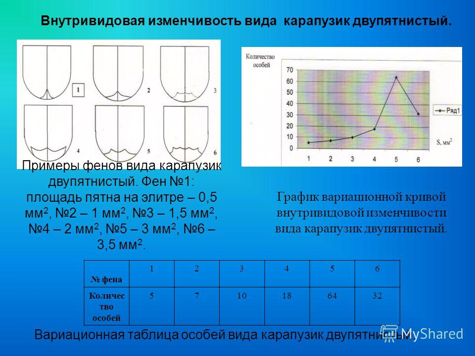 Внутривидовая изменчивость вида карапузик двупятнистый. Примеры фенов вида карапузик двупятнистый. Фен 1: площадь пятна на элитре – 0,5 мм 2, 2 – 1 мм 2, 3 – 1,5 мм 2, 4 – 2 мм 2, 5 – 3 мм 2, 6 – 3,5 мм 2. График вариационной кривой внутривидовой изм