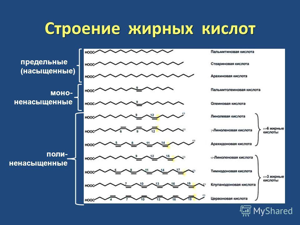 Строение жирных кислот предельные (насыщенные) моно- ненасыщенные поли- ненасыщенные