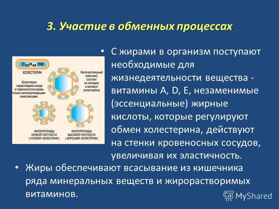 3. Участие в обменных процессах С жирами в организм поступают необходимые для жизнедеятельности вещества - витамины A, D, Е, незаменимые (эссенциальные) жирные кислоты, которые регулируют обмен холестерина, действуют на стенки кровеносных сосудов, ув