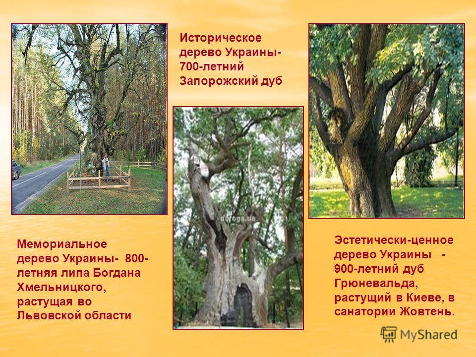 Мемориальное дерево Украины- 800- летняя липа Богдана Хмельницкого, растущая во Львовской области Эстетически-ценное дерево Украины - 900-летний дуб Грюневальда, растущий в Киеве, в санатории Жовтень. Историческое дерево Украины- 700-летний Запорожск