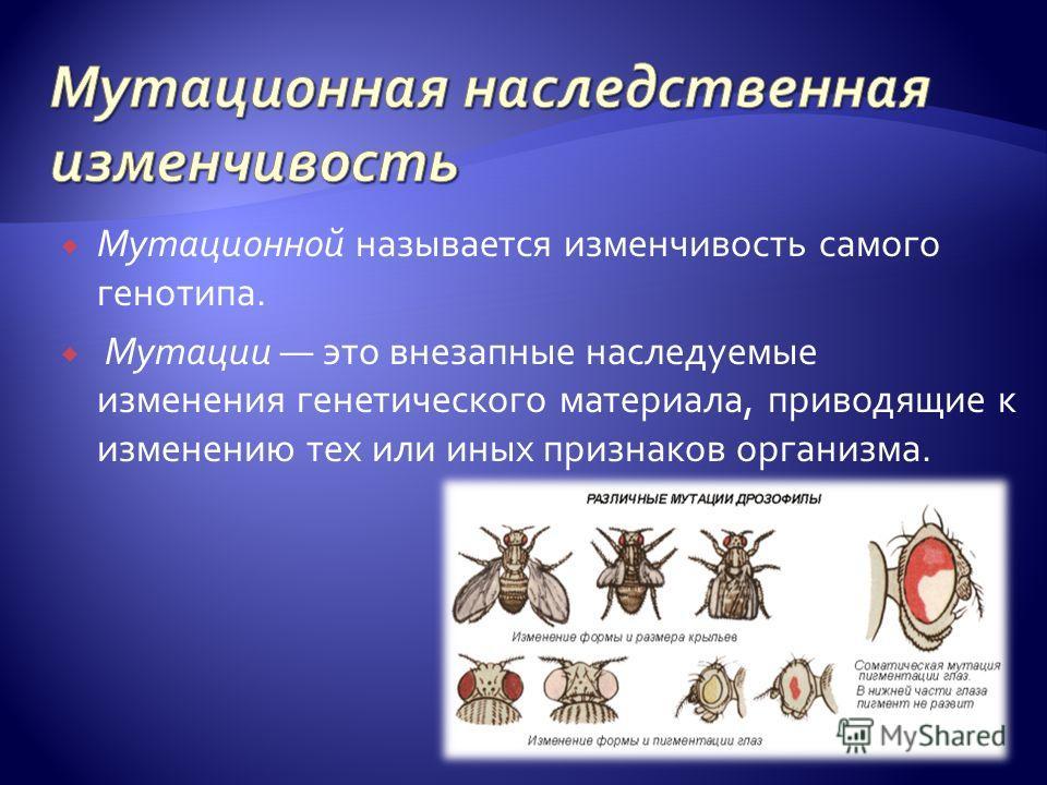 Мутационной называется изменчивость самого генотипа. Мутации это внезапные наследуемые изменения генетического материала, приводящие к изменению тех или иных признаков организма.