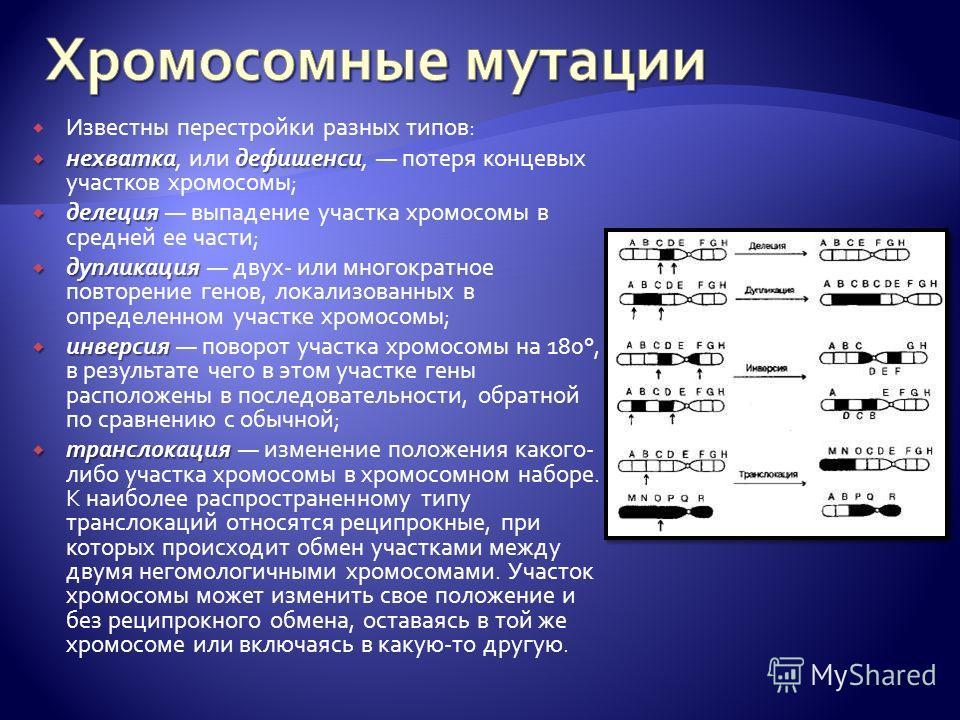 Известны перестройки разных типов: нехваткадефишенси нехватка, или дефишенси, потеря концевых участков хромосомы; делеция делеция выпадение участка хромосомы в средней ее части; дупликация дупликация двух- или многократное повторение генов, локализов