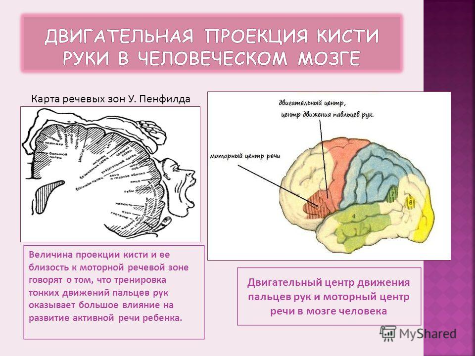 Невропатолог и психиатр В. М. Бехтерев писал, что движения руки всегда были тесно связаны с речью и способствовали ее развитию. Английский психолог Д. Селли также придавал очень большое значение