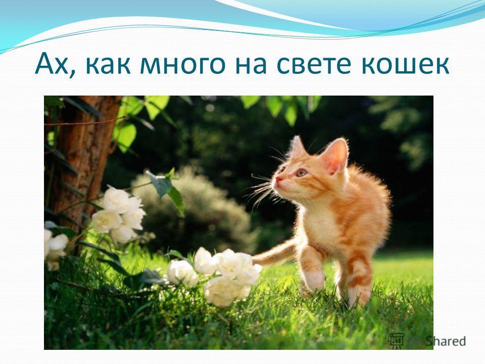 Ах, как много на свете кошек