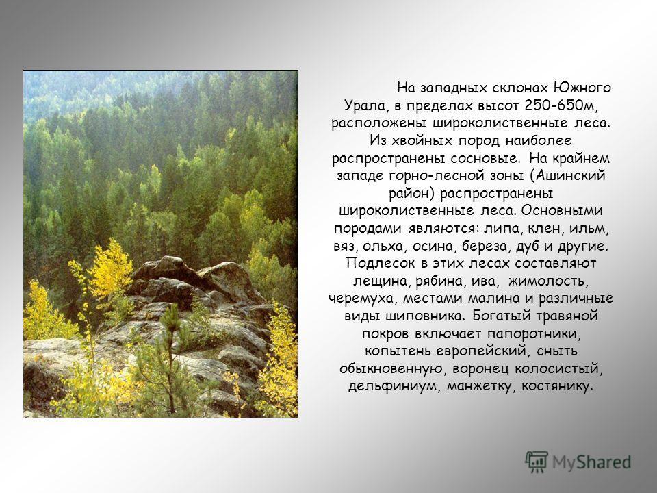 На западных склонах Южного Урала, в пределах высот 250-650м, расположены широколиственные леса. Из хвойных пород наиболее распространены сосновые. На крайнем западе горно-лесной зоны (Ашинский район) распространены широколиственные леса. Основными по