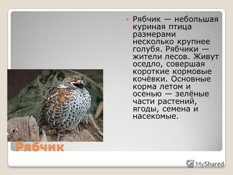 Рябчик Рябчик небольшая куриная птица размерами несколько крупнее голубя. Рябчики жители лесов. Живут оседло, совершая короткие кормовые кочёвки. Основные корма летом и осенью зелёные части растений, ягоды, семена и насекомые.