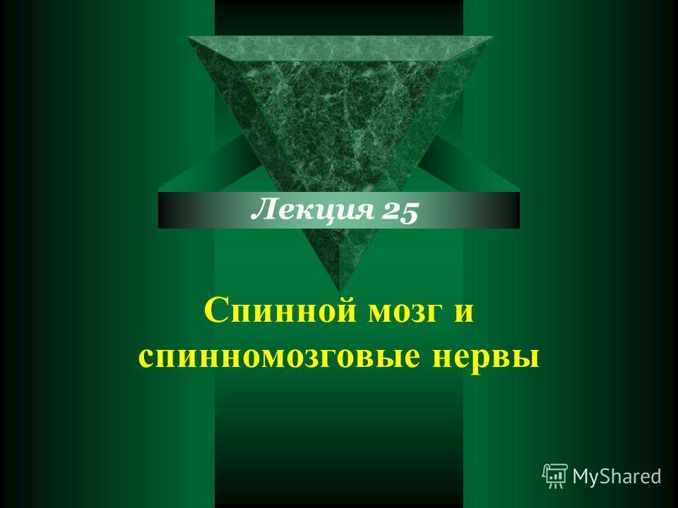 Cпинной мозг и спинномозговые нервы Лекция 25