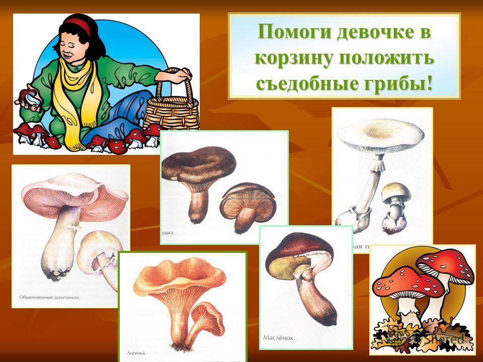 Помоги девочке в корзину положить съедобные грибы!