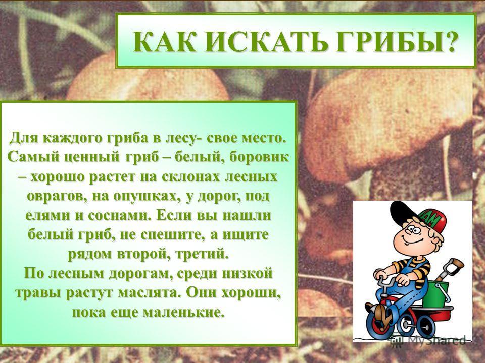 КАК ИСКАТЬ ГРИБЫ? Для каждого гриба в лесу- свое место. Самый ценный гриб – белый, боровик – хорошо растет на склонах лесных оврагов, на опушках, у дорог, под елями и соснами. Если вы нашли белый гриб, не спешите, а ищите рядом второй, третий. По лес