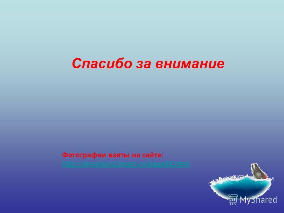 Фотографии взяты на сайте: http://akvariumt.boom.ru/page39.html Спасибо за внимание