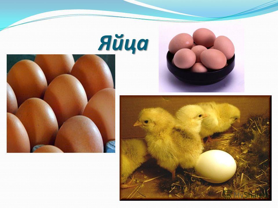 Яйца Яйца