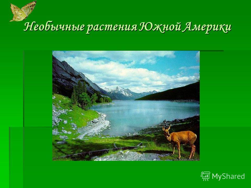 Погода в звериноголовском на 2 дня