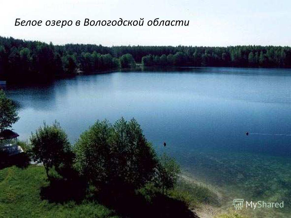 Белое озеро в Вологодской области