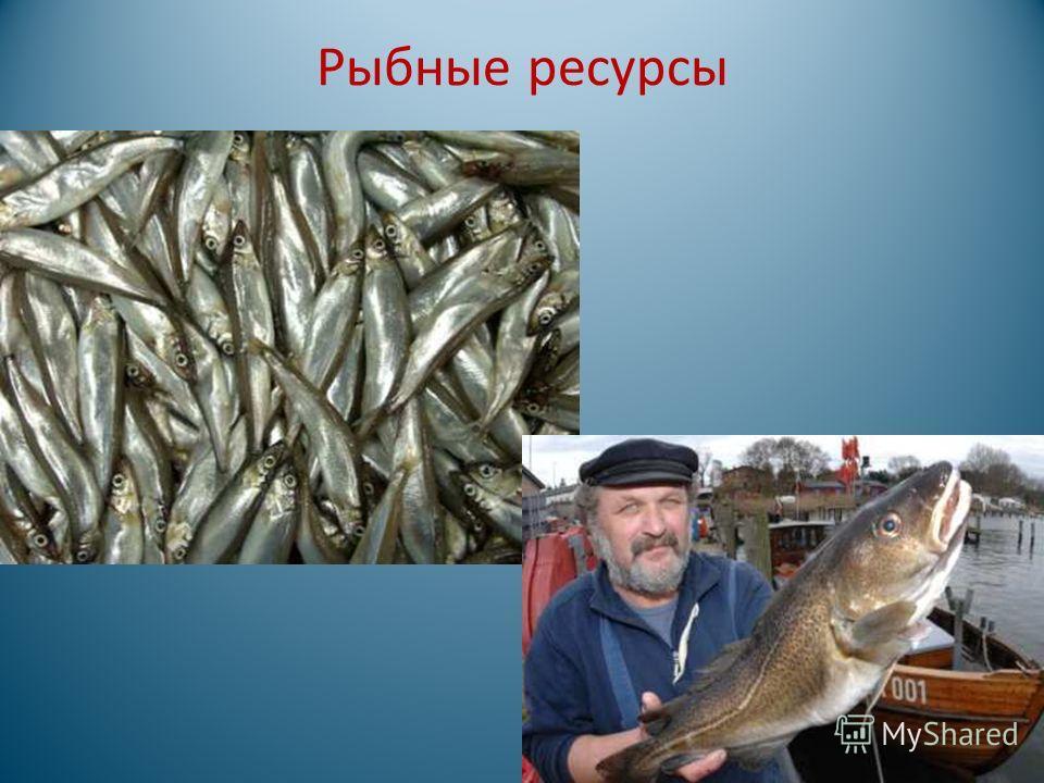 Рыбные ресурсы