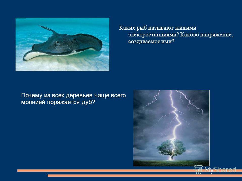 Каких рыб называют живыми электростанциями? Каково напряжение, создаваемое ими? Почему из всех деревьев чаще всего молнией поражается дуб?