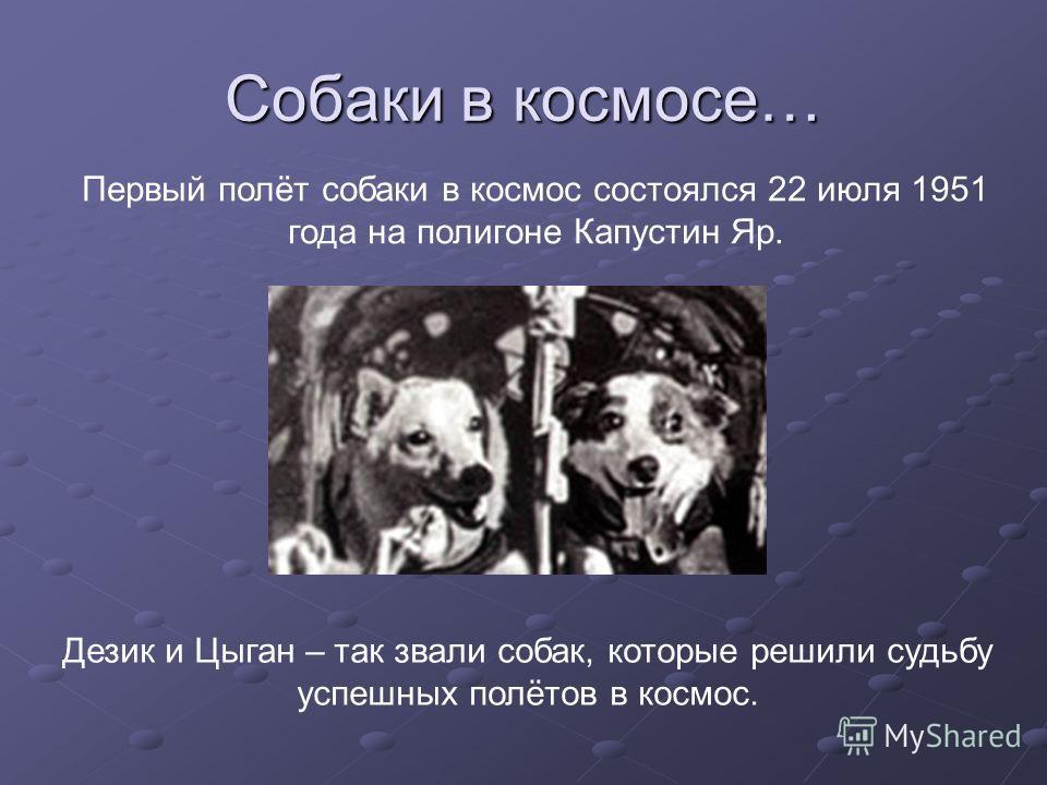 Собаки в космосе… Первый полёт собаки в космос состоялся 22 июля 1951 года на полигоне Капустин Яр. Дезик и Цыган – так звали собак, которые решили судьбу успешных полётов в космос.