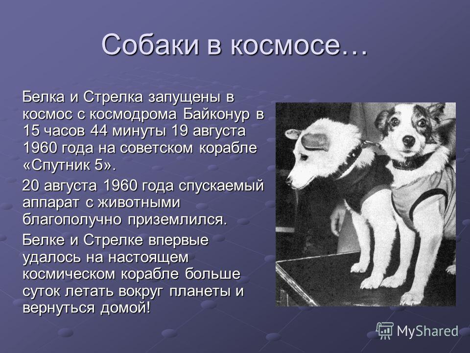 Белка и Стрелка запущены в космос с космодрома Байконур в 15 часов 44 минуты 19 августа 1960 года на советском корабле «Спутник 5». 20 августа 1960 года спускаемый аппарат с животными благополучно приземлился. Белке и Стрелке впервые удалось на насто