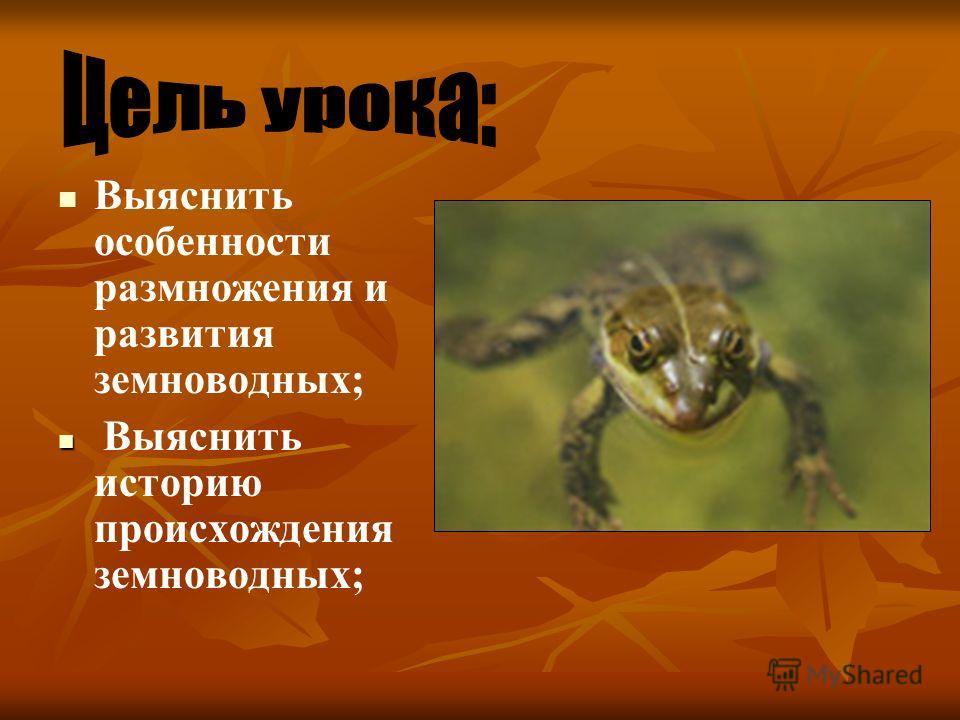 Выяснить особенности размножения и развития земноводных; Выяснить историю происхождения земноводных;