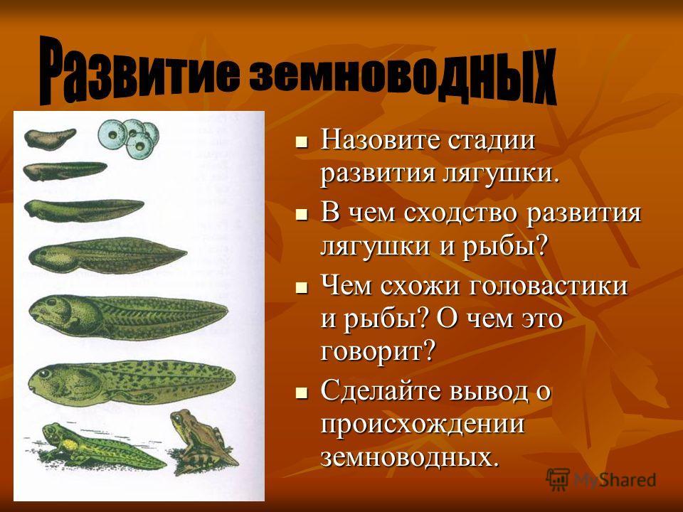 Назовите стадии развития лягушки. Назовите стадии развития лягушки. В чем сходство развития лягушки и рыбы? В чем сходство развития лягушки и рыбы? Чем схожи головастики и рыбы? О чем это говорит? Чем схожи головастики и рыбы? О чем это говорит? Сдел