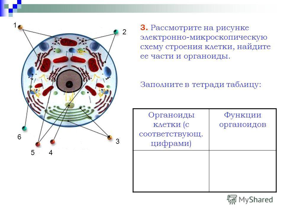 3 1 2 45 6 3. Рассмотрите на рисунке электронно-микроскопическую схему строения клетки, найдите ее части и органоиды. Заполните в тетради таблицу: Органоиды клетки (с соответствующ. цифрами) Функции органоидов