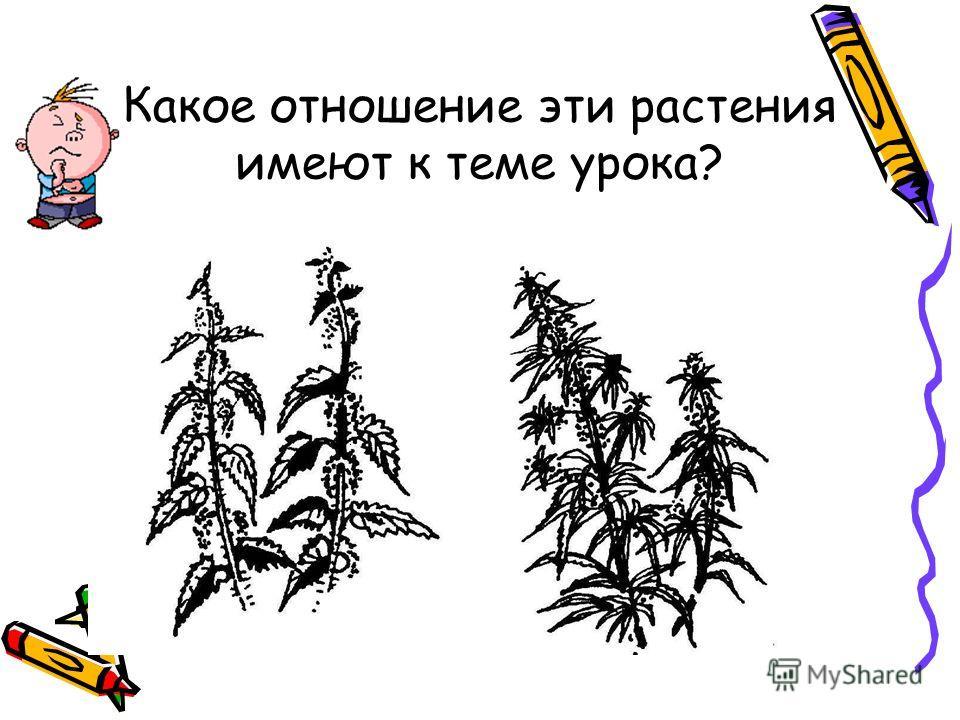 Какое отношение эти растения имеют к теме урока?