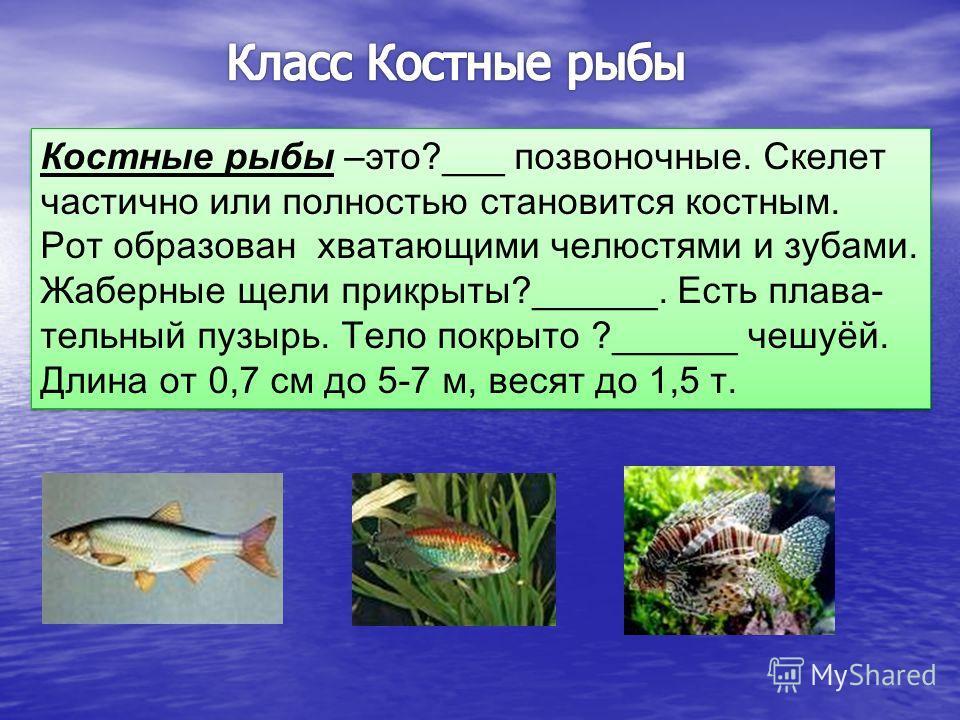 Класс К остные рыбы К остные рыбы Класс Х рящевые рыбы Х рящевые рыбы Подкласс Пластино жаберные Подкласс Цельно- головые Отряд А кулы Отряд С каты