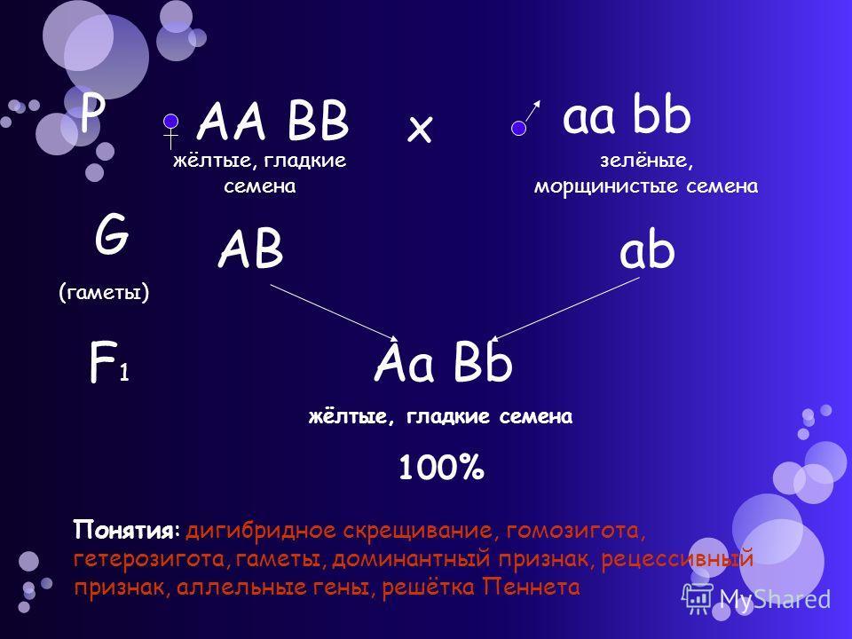 Р АА ВВ аа bb х жёлтые, гладкие семена зелёные, морщинистые семена G (гаметы) АВаbаb F1F1 Аа Bb жёлтые, гладкие семена 100% Понятия: дигибридное скрещивание, гомозигота, гетерозигота, гаметы, доминантный признак, рецессивный признак, аллельные гены,