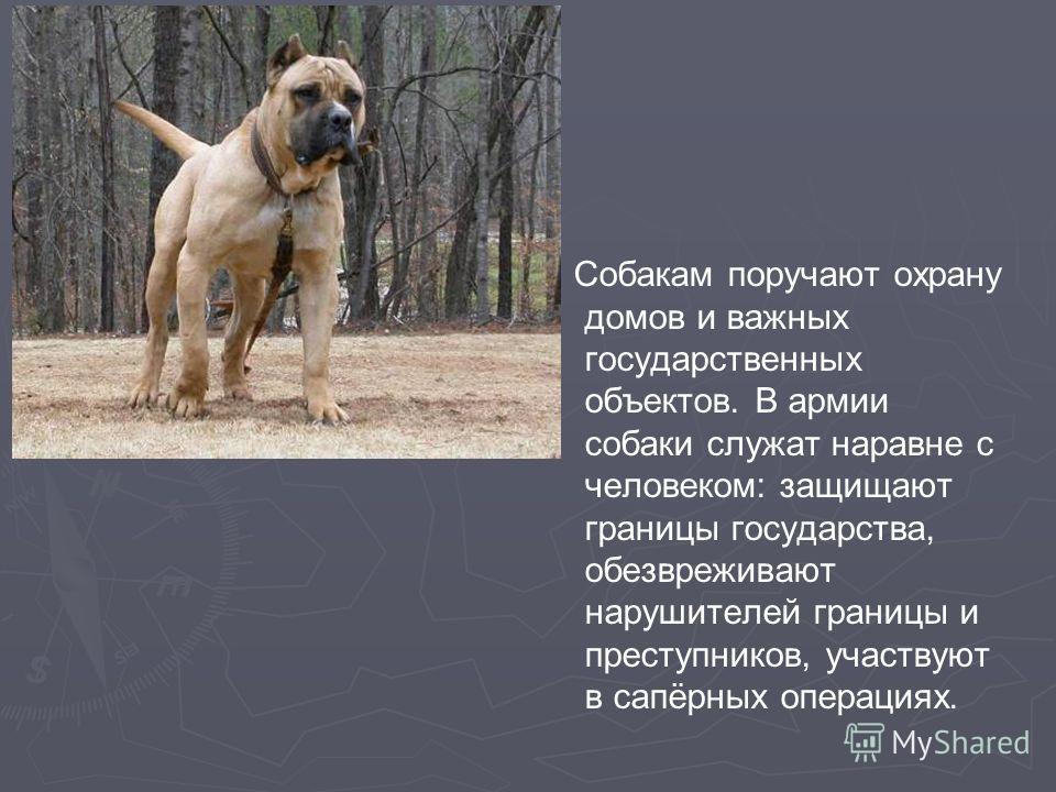 Собакам поручают охрану домов и важных государственных объектов. В армии собаки служат наравне с человеком: защищают границы государства, обезвреживают нарушителей границы и преступников, участвуют в сапёрных операциях.