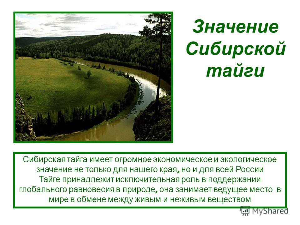Сибирская тайга имеет огромное экономическое и экологическое значение не только для нашего края, но и для всей России Тайге принадлежит исключительная роль в поддержании глобального равновесия в природе, она занимает ведущее место в мире в обмене меж