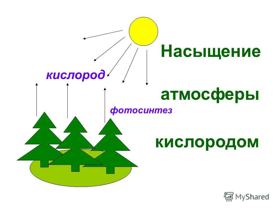 фотосинтез кислород Насыщение атмосферы кислородом