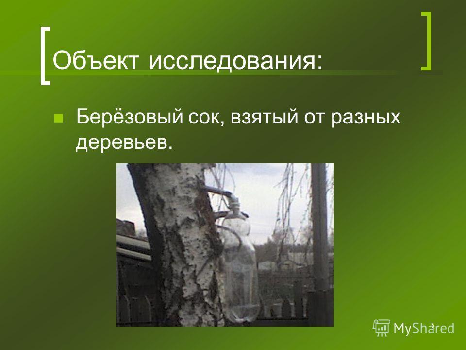 5 Объект исследования: Берёзовый сок, взятый от разных деревьев.