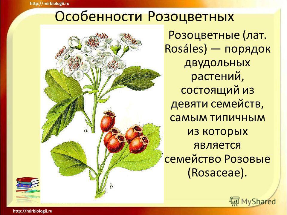 Особенности Розоцветных Розоцветные (лат. Rosáles) порядок двудольных растений, состоящий из девяти семейств, самым типичным из которых является семейство Розовые (Rosaceae).