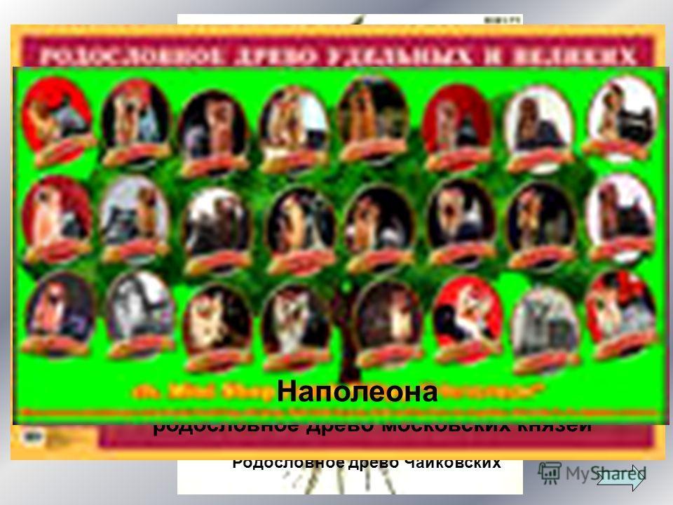 Родословное древо Чайковских родословное древо московских князей Наполеона