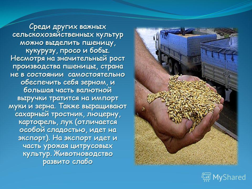 Среди других важных сельскохозяйственных культур можно выделить пшеницу, кукурузу, просо и бобы. Несмотря на значительный рост производства пшеницы, страна не в состоянии самостоятельно обеспечить себя зерном, и большая часть валютной выручки тратитс