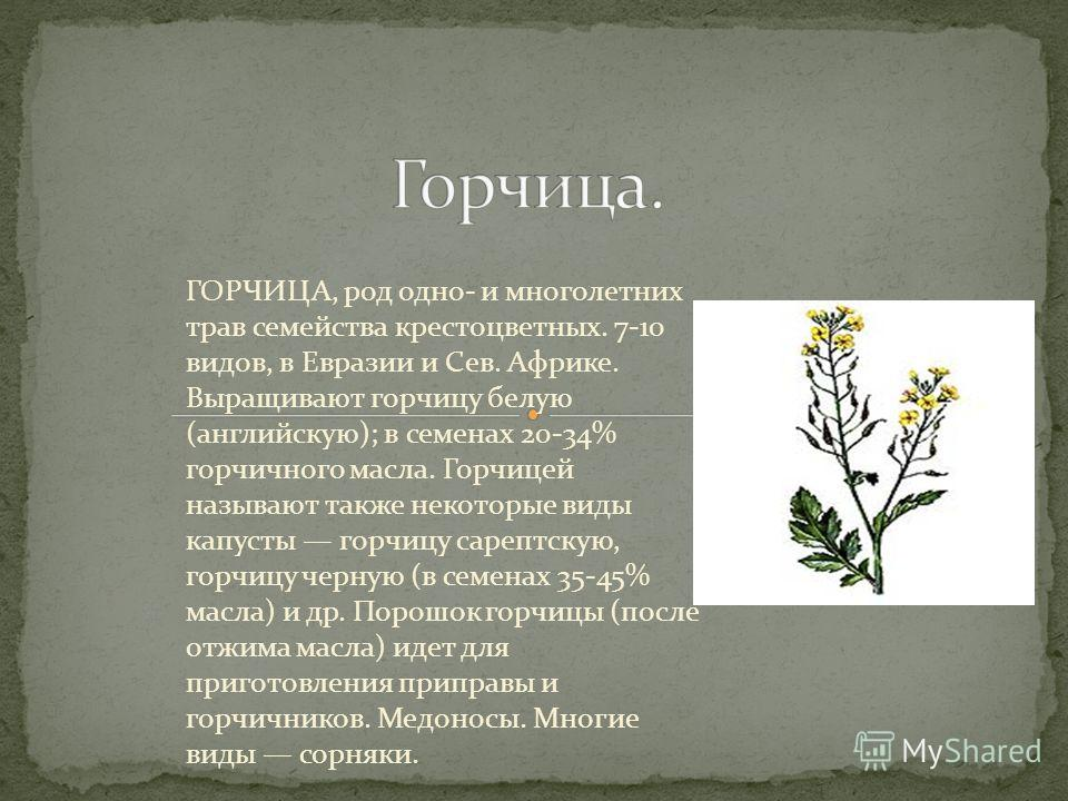 ГОРЧИЦА, род одно- и многолетних трав семейства крестоцветных. 7-10 видов, в Евразии и Сев. Африке. Выращивают горчицу белую (английскую); в семенах 20-34% горчичного масла. Горчицей называют также некоторые виды капусты горчицу сарептскую, горчицу ч