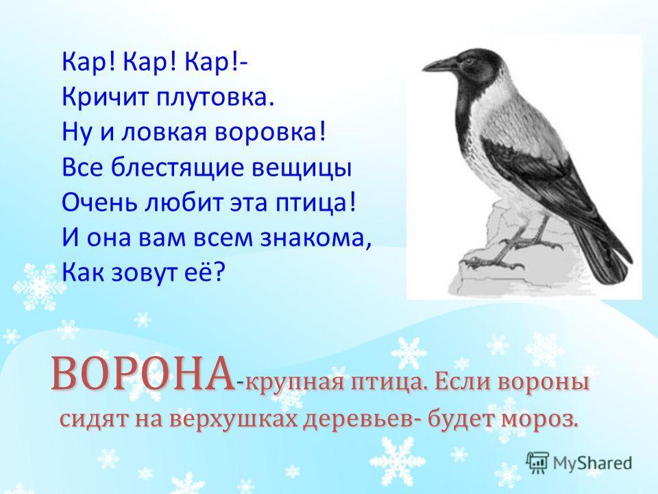 ВОРОНА -крупная птица. Если вороны сидят на верхушках деревьев- будет мороз. Кар! Кар! Кар!- Кричит плутовка. Ну и ловкая воровка! Все блестящие вещицы Очень любит эта птица! И она вам всем знакома, Как зовут её?