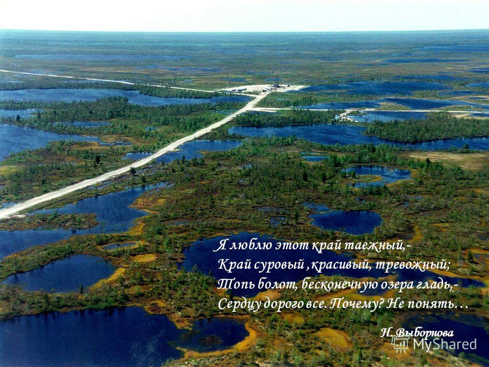 Я люблю этот край таежный,- Край суровый,красивый, тревожный; Топь болот, бесконечную озера гладь,- Сердцу дорого все. Почему? Не понять… Н. Выборнова