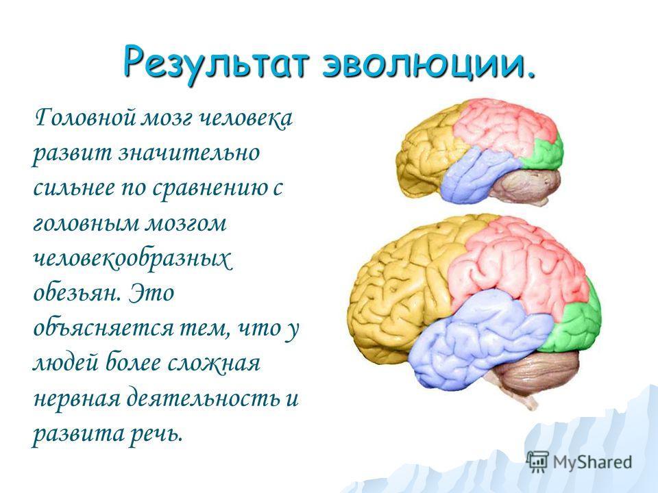 Результат эволюции. Головной мозг человека развит значительно сильнее по сравнению с головным мозгом человекообразных обезьян. Это объясняется тем, что у людей более сложная нервная деятельность и развита речь.