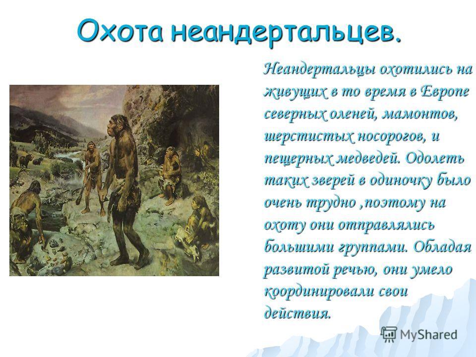 Охота неандертальцев. Неандертальцы охотились на живущих в то время в Европе северных оленей, мамонтов, шерстистых носорогов, и пещерных медведей. Одолеть таких зверей в одиночку было очень трудно,поэтому на охоту они отправлялись большими группами.