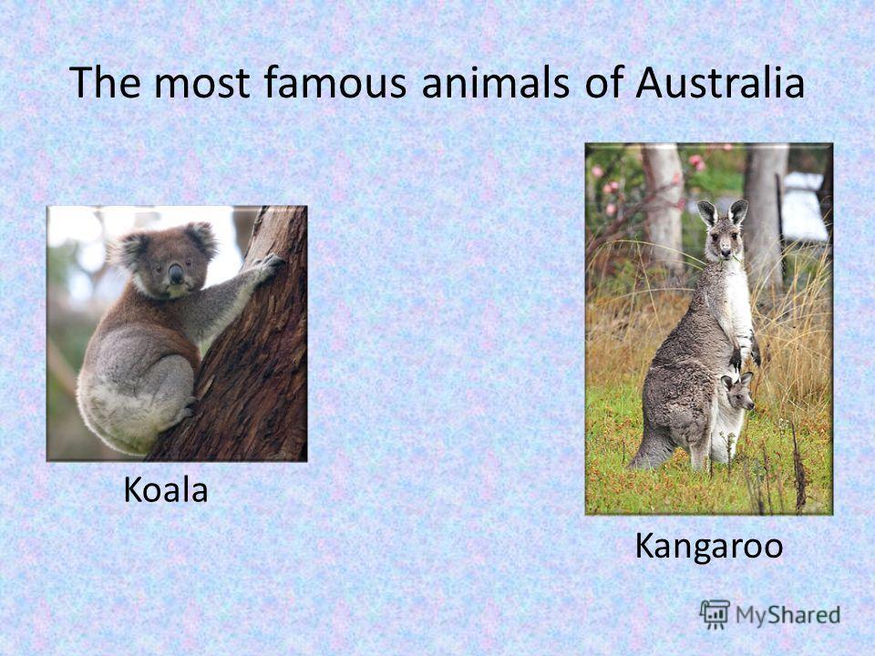 The most famous animals of Australia Koala Kangaroo