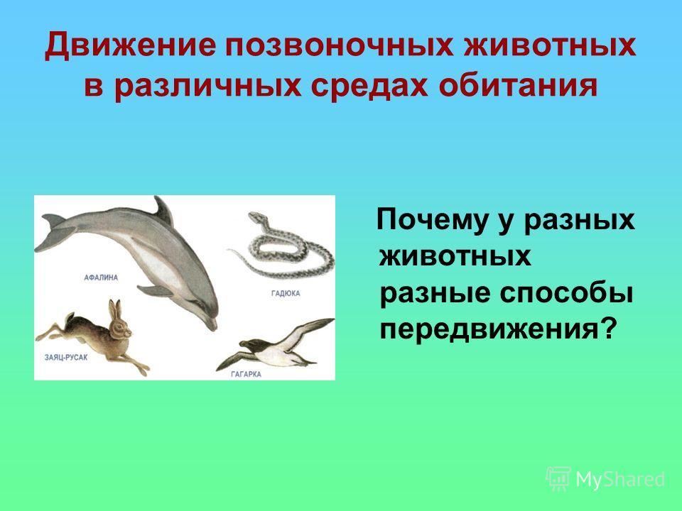 Движение позвоночных животных в различных средах обитания Почему у разных животных разные способы передвижения?