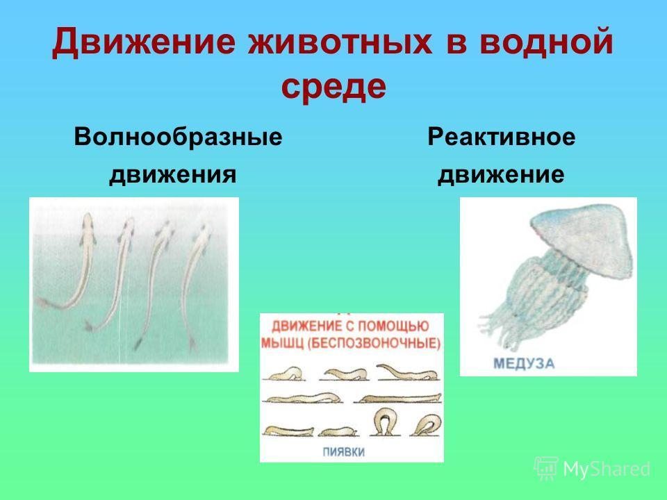 Движение животных в водной среде Волнообразные Реактивное движения движение