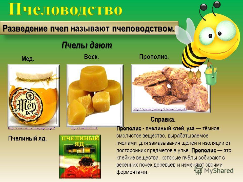Разведение пчел пчеловодством. Разведение пчел называют пчеловодством. Мед. Воск. http://www.rid.su/frontpage?page=5http://beefd.ru/vosk Прополис. http://nyam-nyam.org/interesno/propolisСправка. Прополис Прополис - пчелиный клей, уза тёмное смолистое