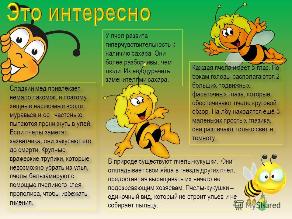 Сладкий мед привлекает немало лакомок, и поэтому хищные насекомые вроде муравьев и ос, частенько пытаются проникнуть в улей. Если пчелы заметят захватчика, они закусают его до смерти. Крупные вражеские трупики, которые невозможно убрать из улья, пчел