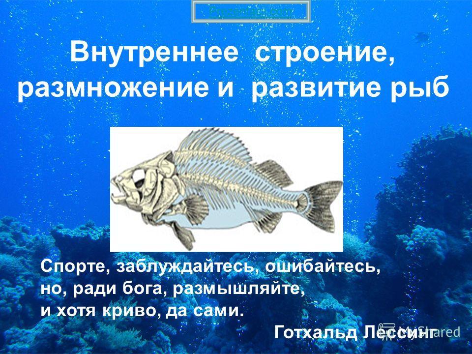 Внутреннее строение, размножение и развитие рыб Спорте, заблуждайтесь, ошибайтесь, но, ради бога, размышляйте, и хотя криво, да сами. Готхальд Лессинг Prezentacii.com
