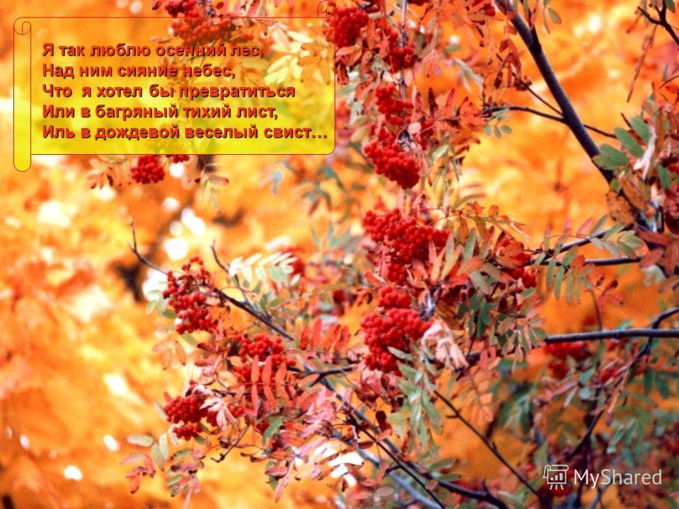 Я так люблю осенний лес, Над ним сияние небес, Что я хотел бы превратиться Или в багряный тихий лист, Иль в дождевой веселый свист…